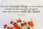 Most Beautiful Things